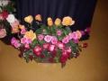 treloars-roses2